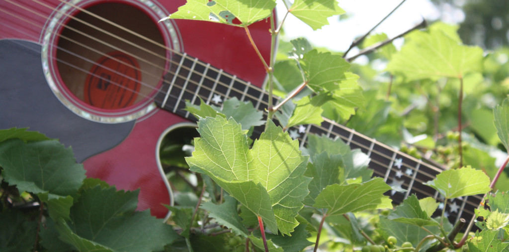 Red-guitar-in-vineyard-cropped