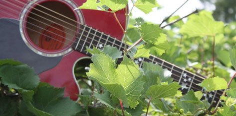 Red-guitar-in-vineyard-website-size